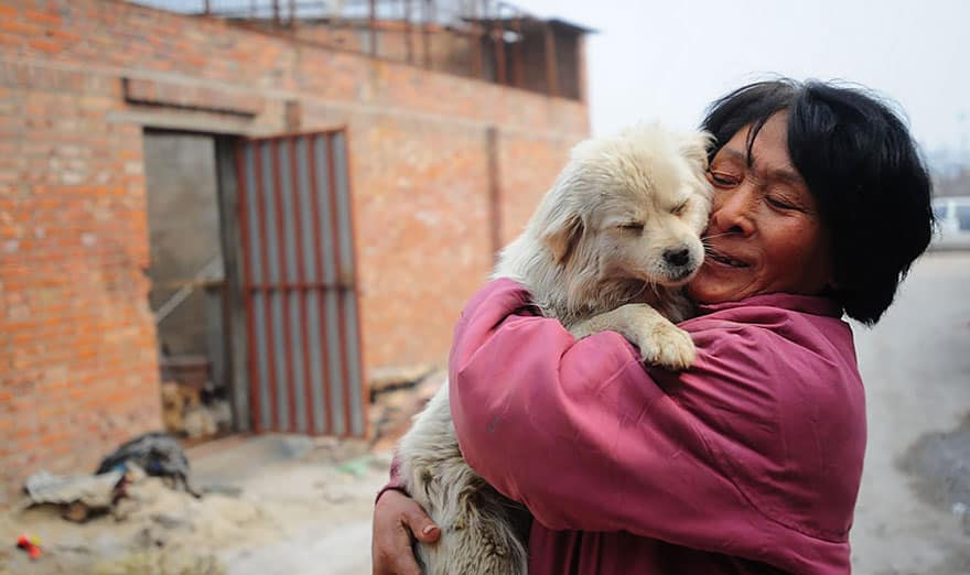 rescued-dogs-yulin-dog-meat-festival-china-5