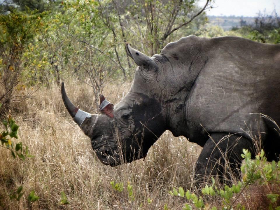 Credit: Rhino Rescue Project