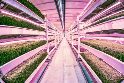 Take A Tour Of World's First Underground Organic Farm Inside A London WW2 Bomb Shelter!
