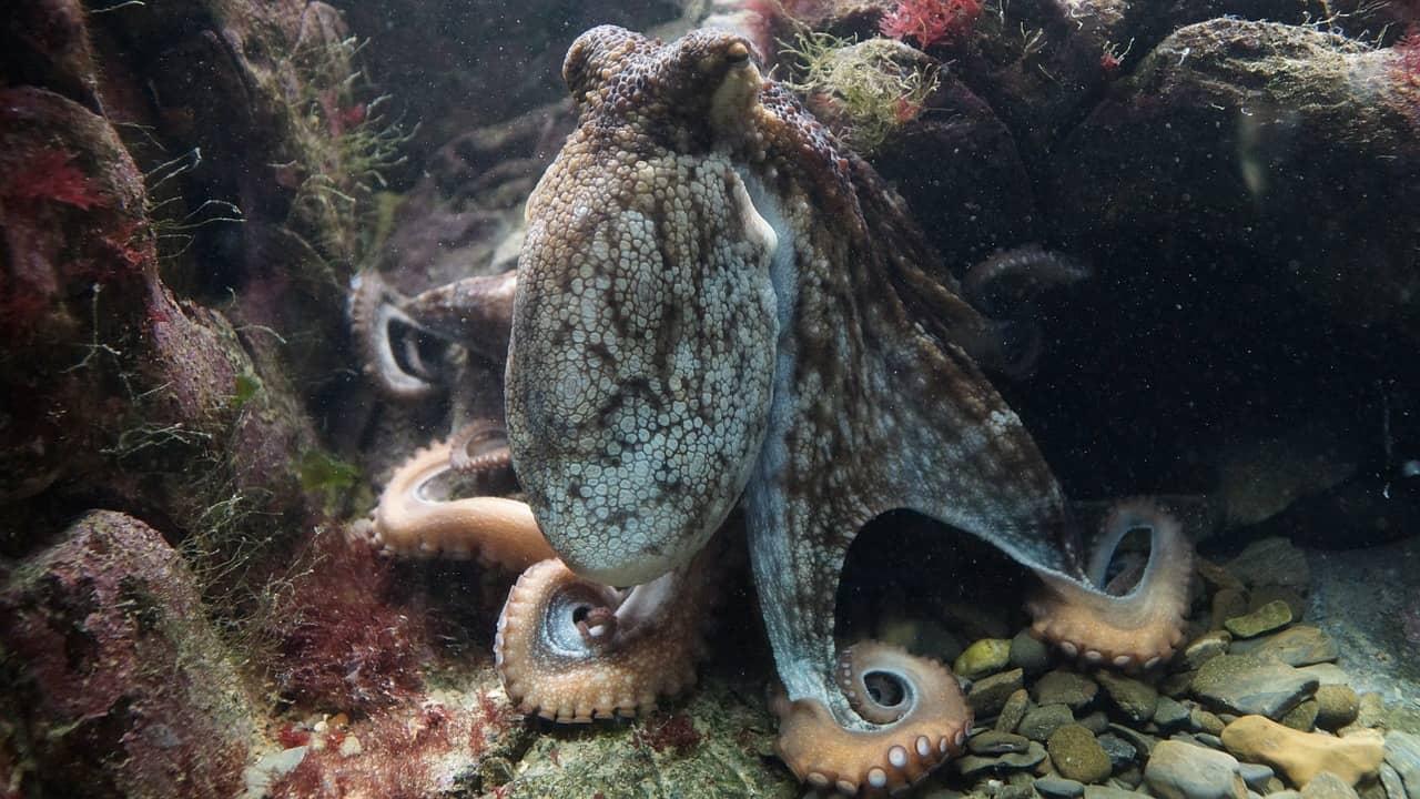 octopus-428745_1280