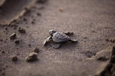 sea-turtle-356125_1280