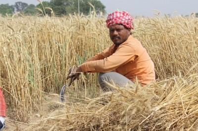 wheat-fields-762213_640
