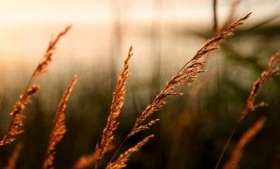 grass-76069_640