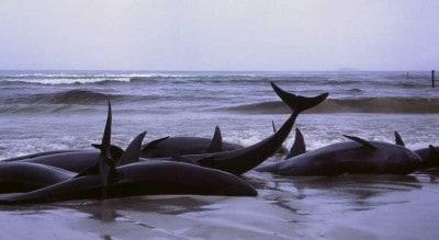 whales2a