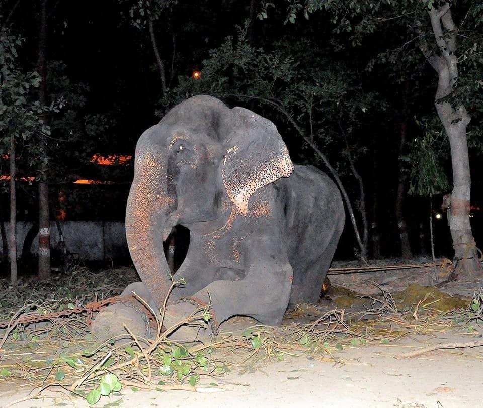 Credit: Wildlife SOS