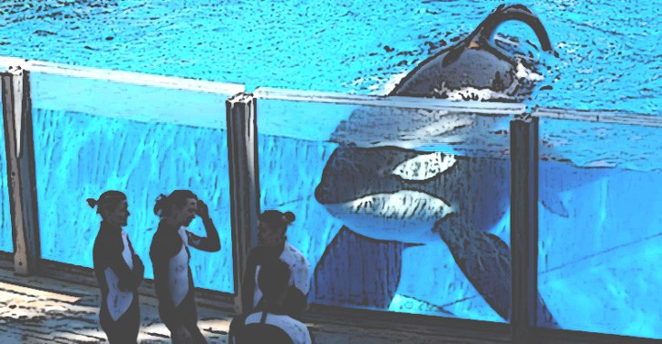 seaworld-can-no-longer-breeed-orcas