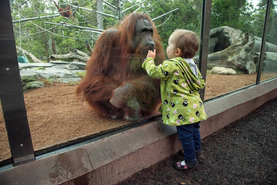 Credit: San Diego Zoo