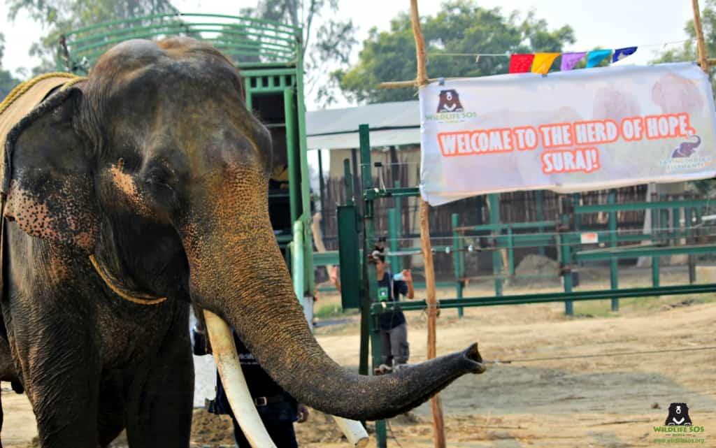 Credit: Wildlife SOS India