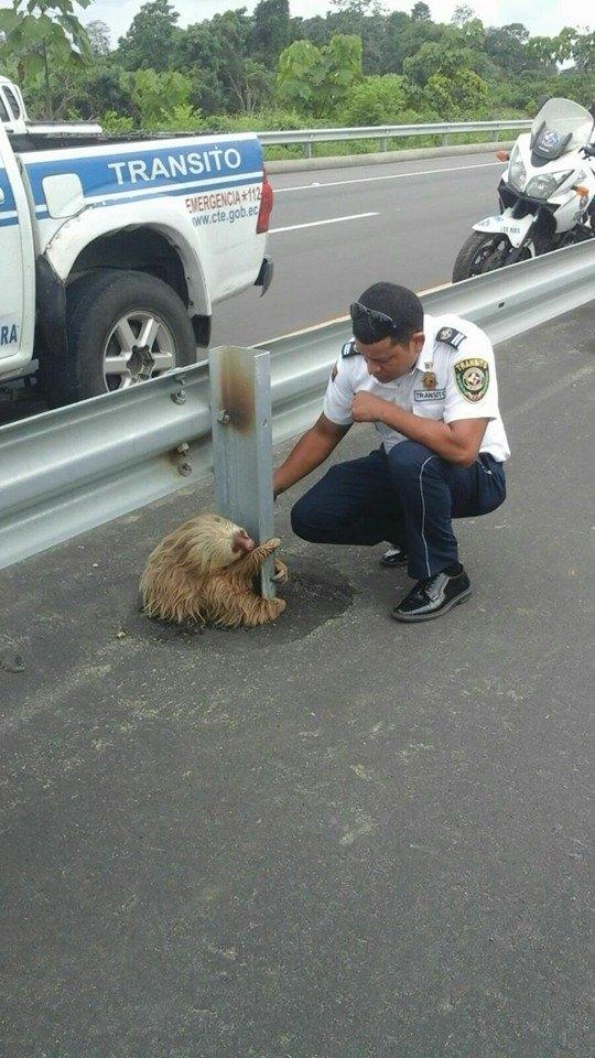 Credit: Comisión de Tránsito del Ecuador