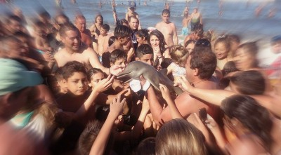 Tourists Stupidly Kill Baby Dolphin For The Sake Of Capturing Selfies
