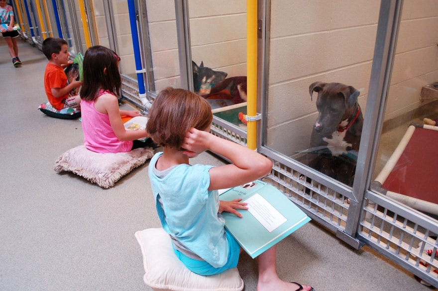 Credit: Humane Society of Missouri