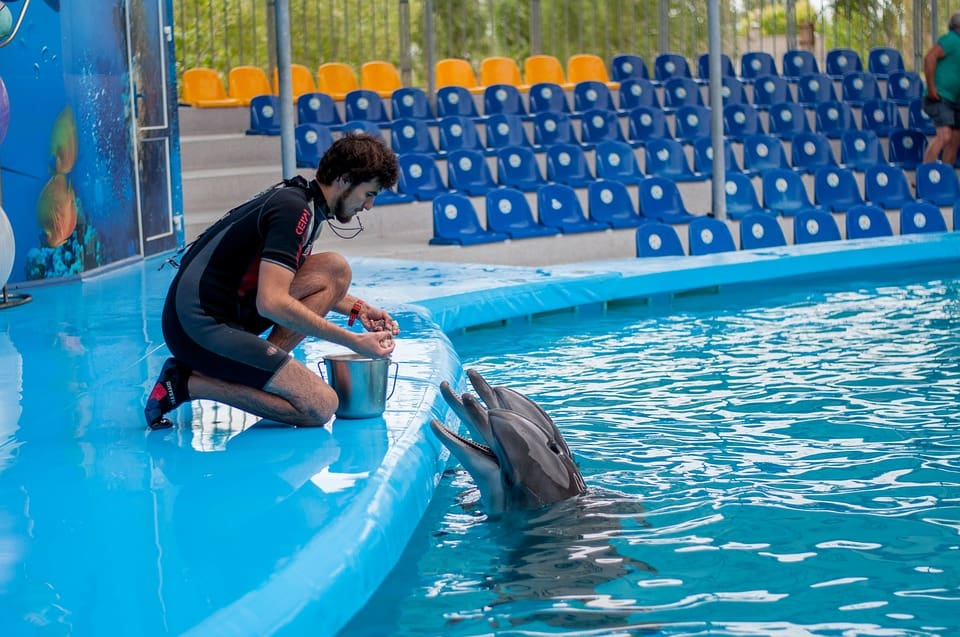dolphins-1132847_960_720