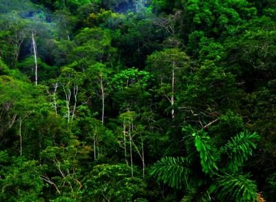 Credit: Tropical Rainforests of Ecuador