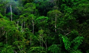 Credit: Tropical Rainforests of Ecuador