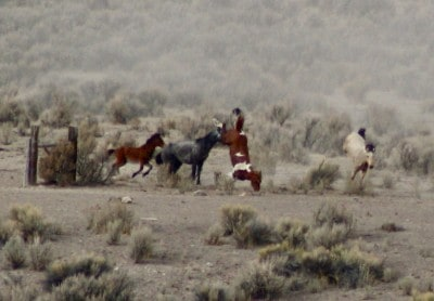 Credit: Wild Horse Education