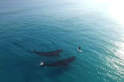 Drone Captures Most Captivating Whale/Paddle Boarder Experience Ever [Watch]