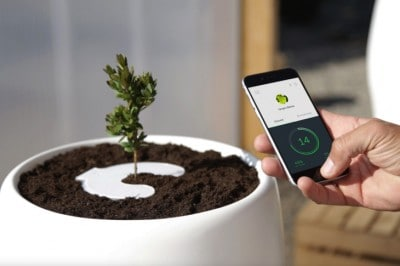 This Beatiful Product Will Single-Handedly Transform Your Loved One's Ashes Into A Tree