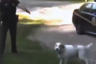 Mom Arrested For Stopping Cop From Killing Her Dog Found Not Guilty [Watch]