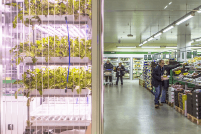The Next Big Trend: Farming In Your Supermarket