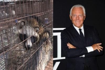 Armani Announces That They Will Never Use Fur In Their Fashion Lines Again