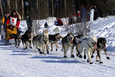 Man Arrested After Intentionally Hitting Iditarod Teams And Killing One Dog, Injuring Others