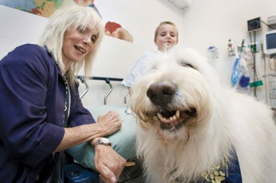 This Hospital Allows Pets To Visit Sick Humans To Help Them Feel Better [Watch]