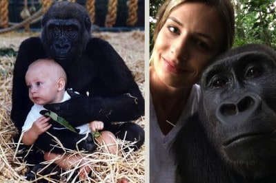 This Woman Just Reunited With The Gorillas She Was Raised With And It's Beautiful