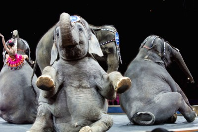 The Ringling Bros. Elephants Just Performed Their Last Show And Are Now Retired