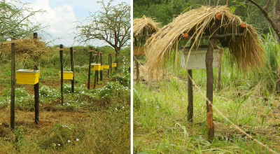 African Farmers Are Using Bees To Humanely Deter Elephants From Crops