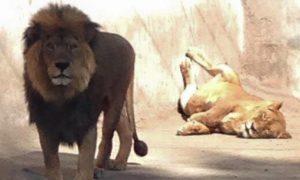 Credit: Zoologico Nacional de Chile