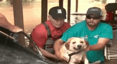 Sheriff Helps Rescue Dog Chained To A Porch In Rising Floodwaters