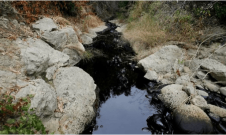 Oil spreads throughout Ventura County's Prince Barranca ravine. (Credit: AP)