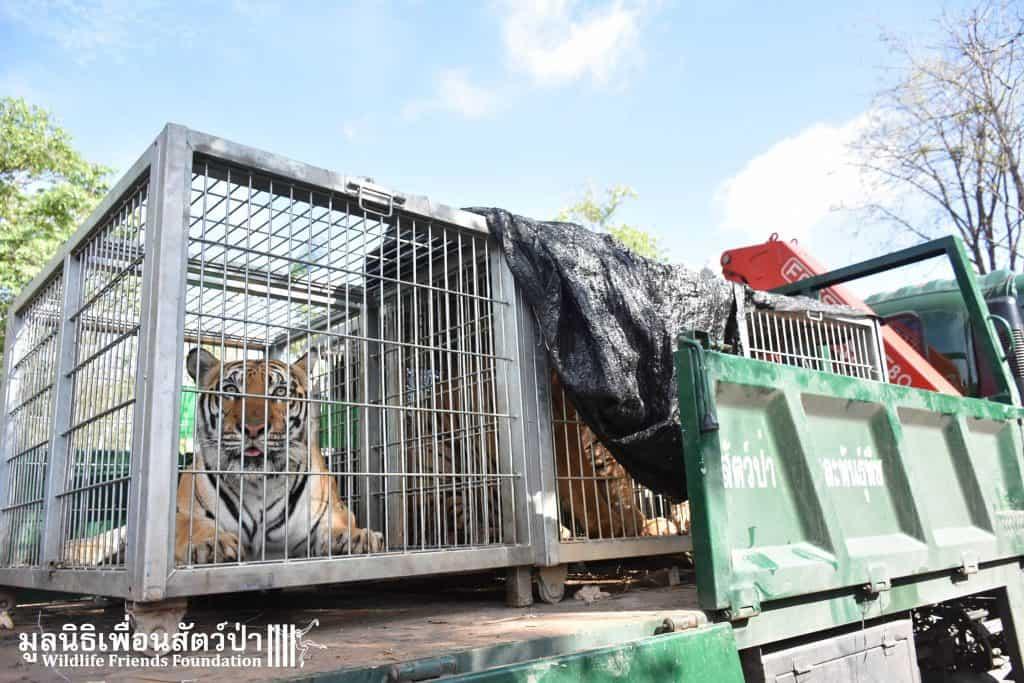 Credit: Wildlife Friends Foundation Thailand