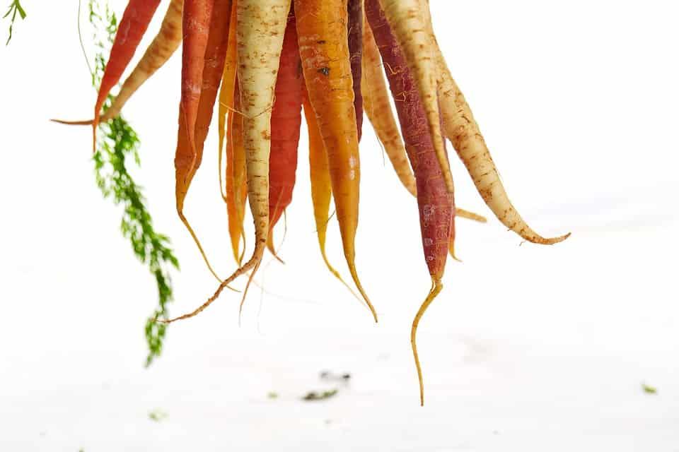 carrots-1149173_960_720