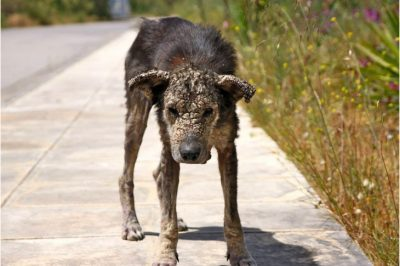 This Dog Turned To Stone As A Stray, See Her Miraculous Transformation After Being Rescued