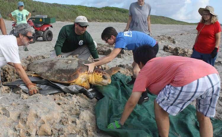 Credit: Florida Fish and Wildlife Commission