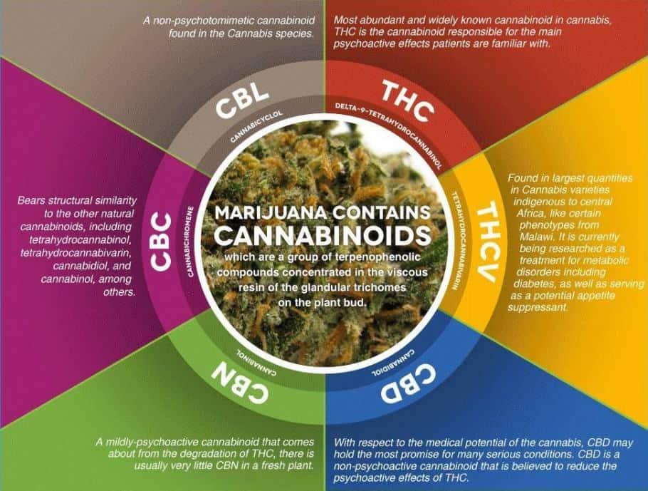 cannabinoides-910x689