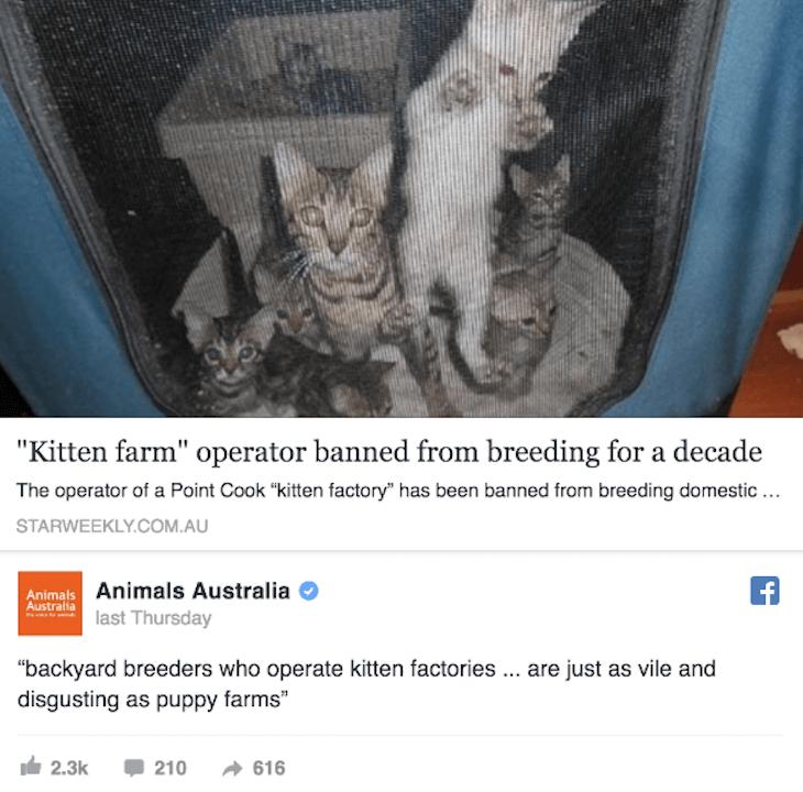 1. Kitten Farm