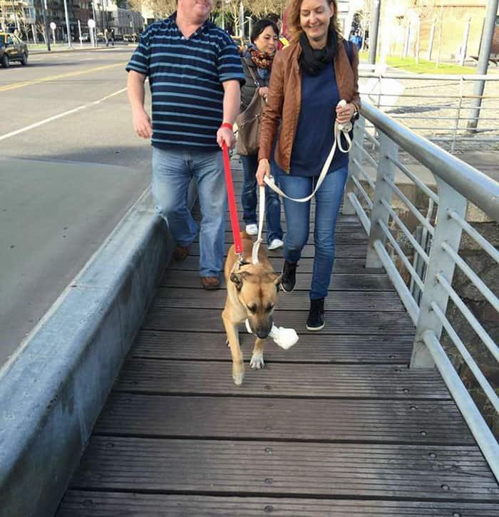 Credit: Mascotas Puerto Madero Adopciones Responsables