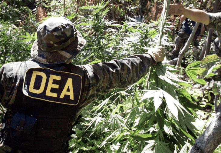 Photo from marijuana.com