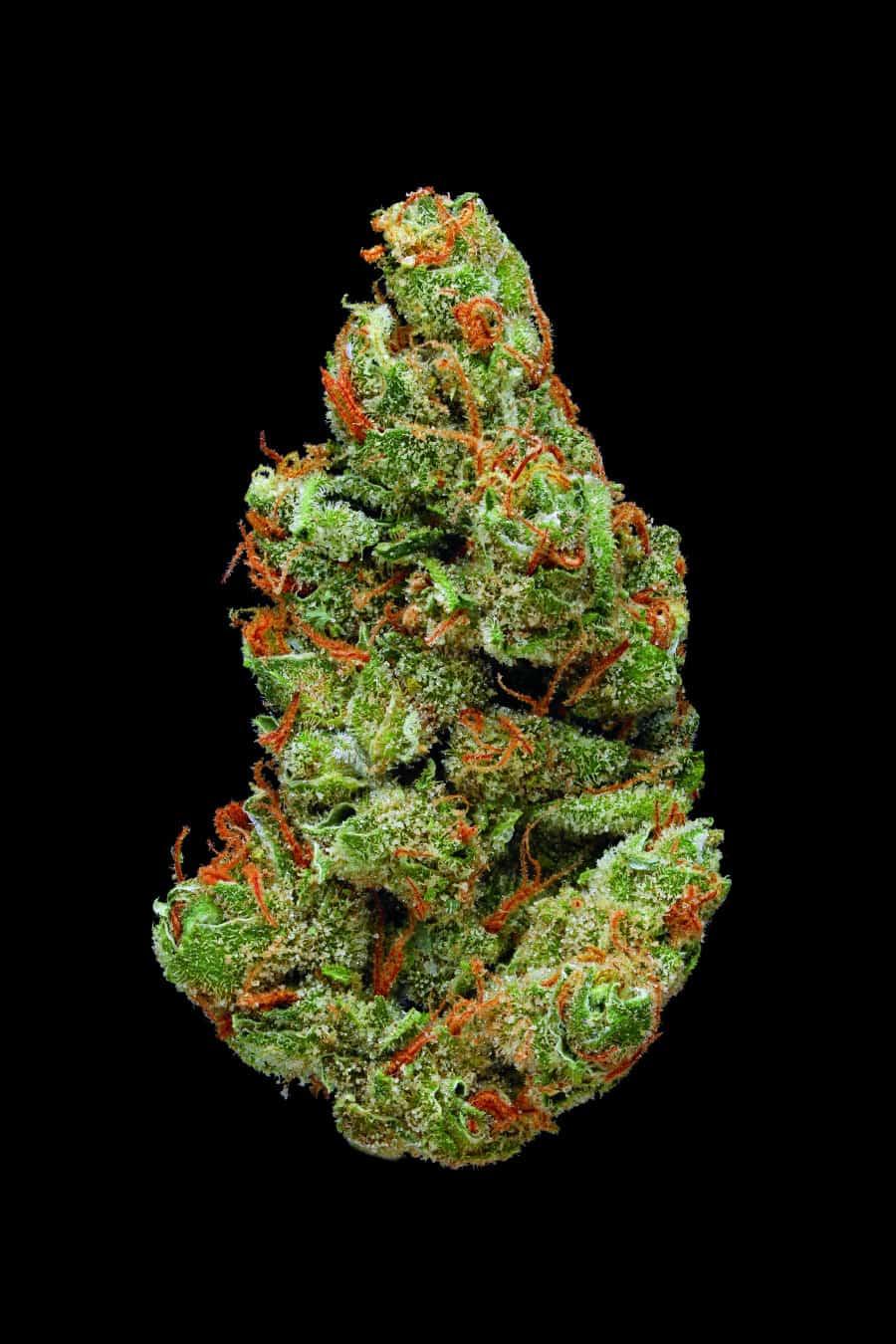 Credit: (Green: A Field Guide to Marijuana)