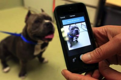 This Free App Is Helping To Reunite Fur Babies With Their Humans