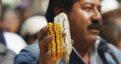 Victory In Mexico: Indigenous Activists Win Major Court Rulings Against Monsanto