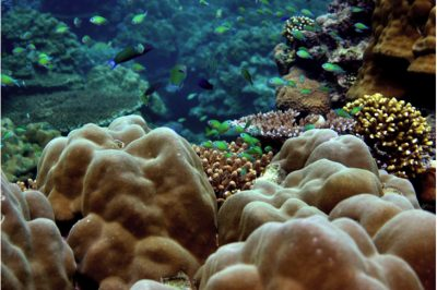 3D-Printed Coral Reefs Could Be The Future Of Restoring Marine Ecosystems