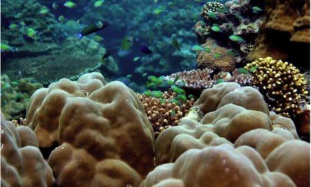 Credit: Reef Arabia