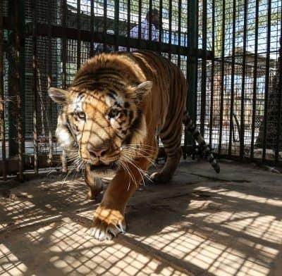 Gaza Zoo Becomes A Nightmare For Wildlife Due To Israeli Bombings