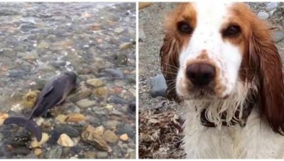 Dog Saves Baby Dolphin Stranded On The Beach In Wales