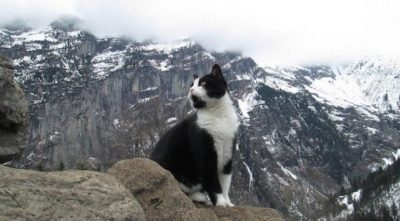 Mysterious Feline Rescues Injured Tourist From Swiss Mountains [Video]