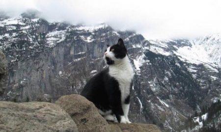 Gimmelwald-Cat-sc4s2cg