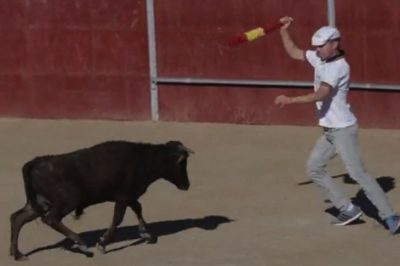 Baby Cows Forced To Fight — And Die — In Bullfights